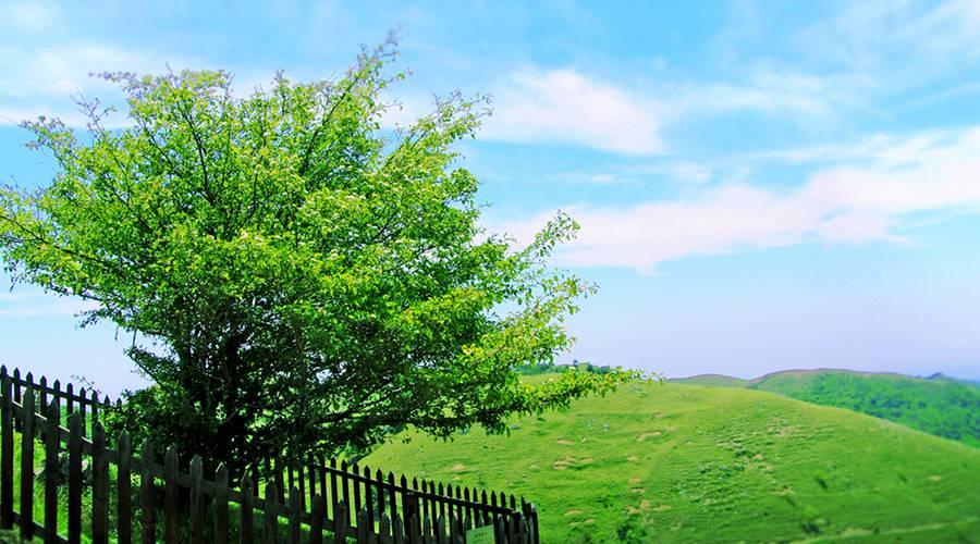 宜昌金狮宾馆1晚+百里荒风景区门票2张,电影山楂树之恋拍摄地【赏高山