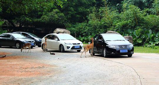 长隆香江野生动物园门票