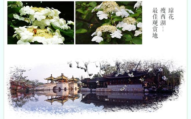 """瘦西湖景区 扬州有三怪:山是小的,湖是瘦的,花是""""穷""""的."""