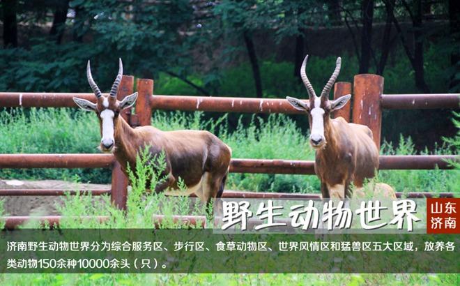 济南跑马岭野生动物园景区门票预订