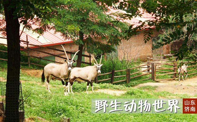 济南跑马岭生态休闲度假区(原跑马岭野生动物园)预
